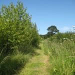 Ferma Wood, Barrow, Cheshire