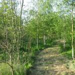 Footpath in Ferma Wood