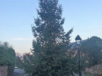 Tree 2018